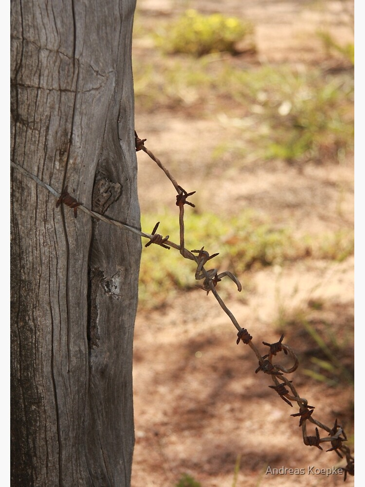 Old barbed wire by mistered