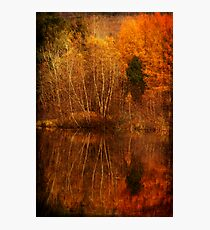 restes d'automne Photographic Print
