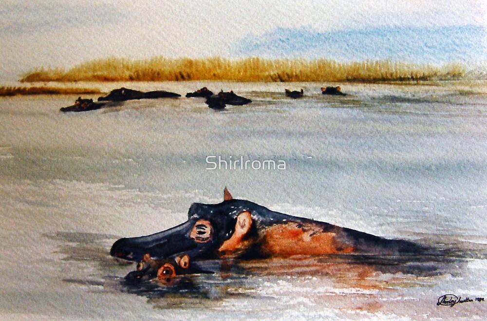 Hippo watch www.Shirleycharlton.com by Shirlroma