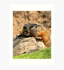 bored marmot Art Print