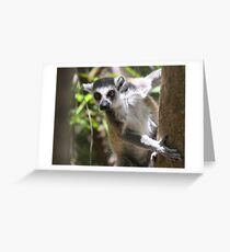 Curious Lemur ~ landscape Greeting Card