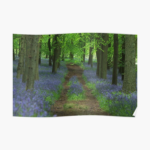 Bluebell way Poster