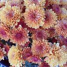 Golden-Orange Chrysanthemum Flowers by James Brotherton