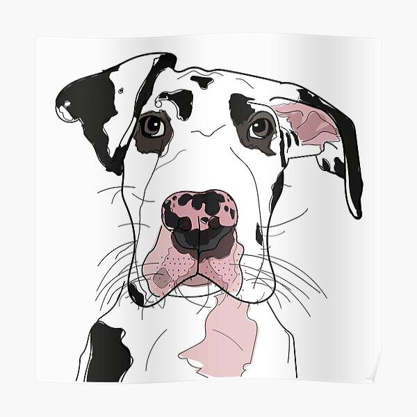 Great Dane b/w/pink dog Poster