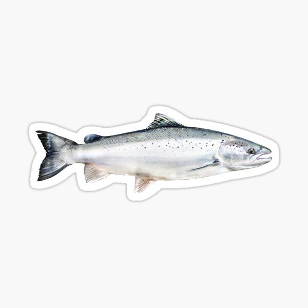 Atlantic Salmon Sticker