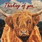 Highland Cow in Early Snow - Thinking of You Card by EuniceWilkie