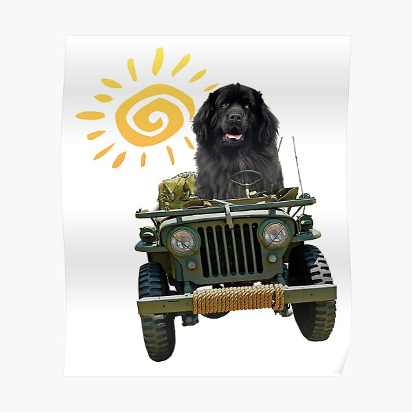Black Newfie Driving Jeep Poster