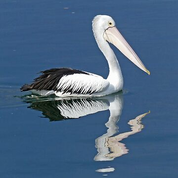 Pelican on the Manning by grmahyde
