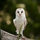 White Owl by Apatche Revealed