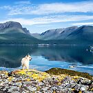 Cairn Terrier and Loch Kishorn by Iain MacLean