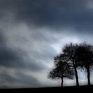 Three Trees in Winter by ROSE DEWHURST