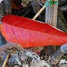 Crash Landing - Fallen Leaf by Kathryn Jones