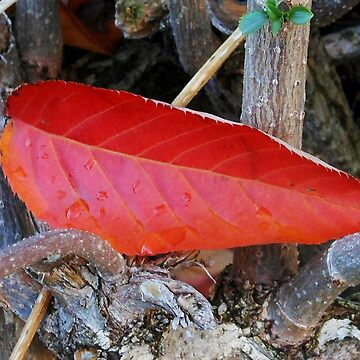 Crash Landing - Fallen Leaf by kathrynsgallery
