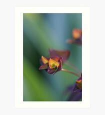 Euphorbia rainbow Art Print