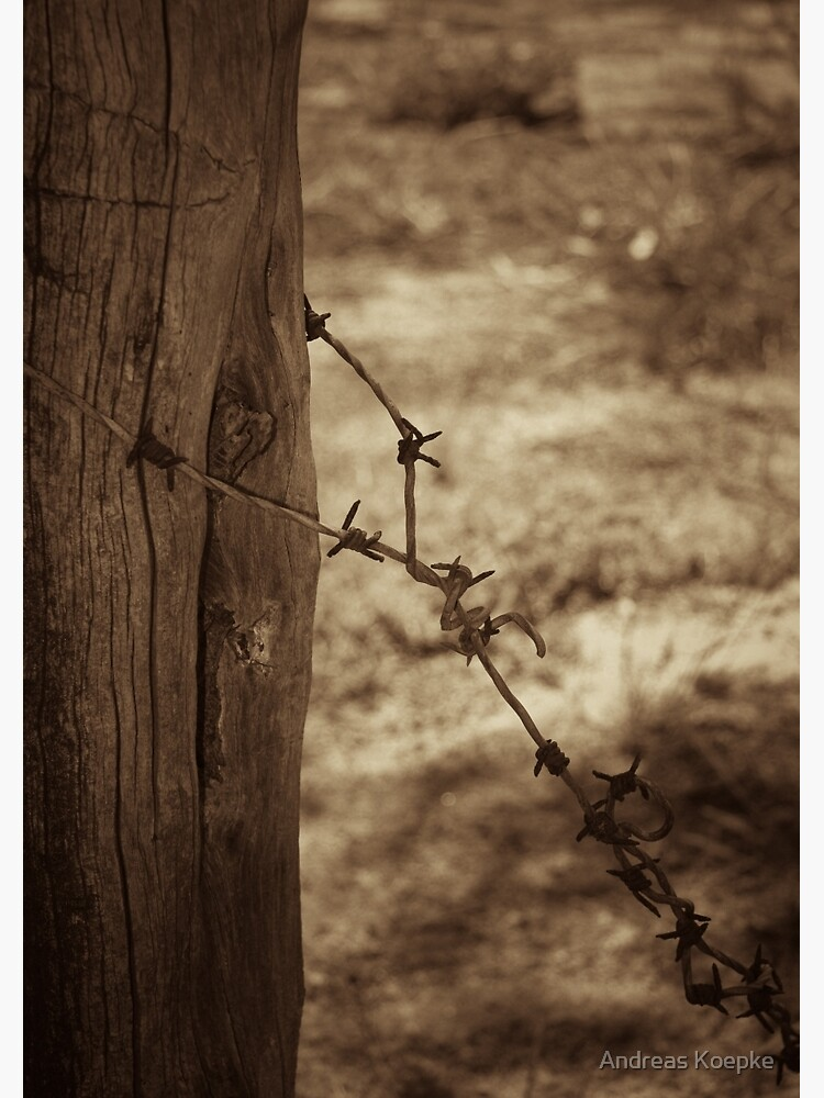 Old barbed wire - sepia by mistered