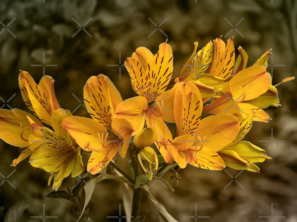 Yellow Alstroemeria Lilies by Elaine Teague
