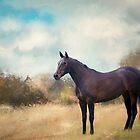 Misty Shadow NZ. by Lyn Darlington