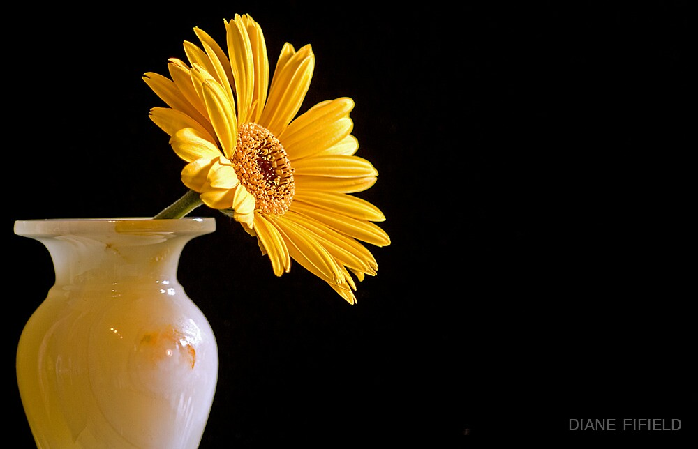 Reaching out  by DIANE  FIFIELD