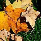 leaves by Phillip M. Burrow