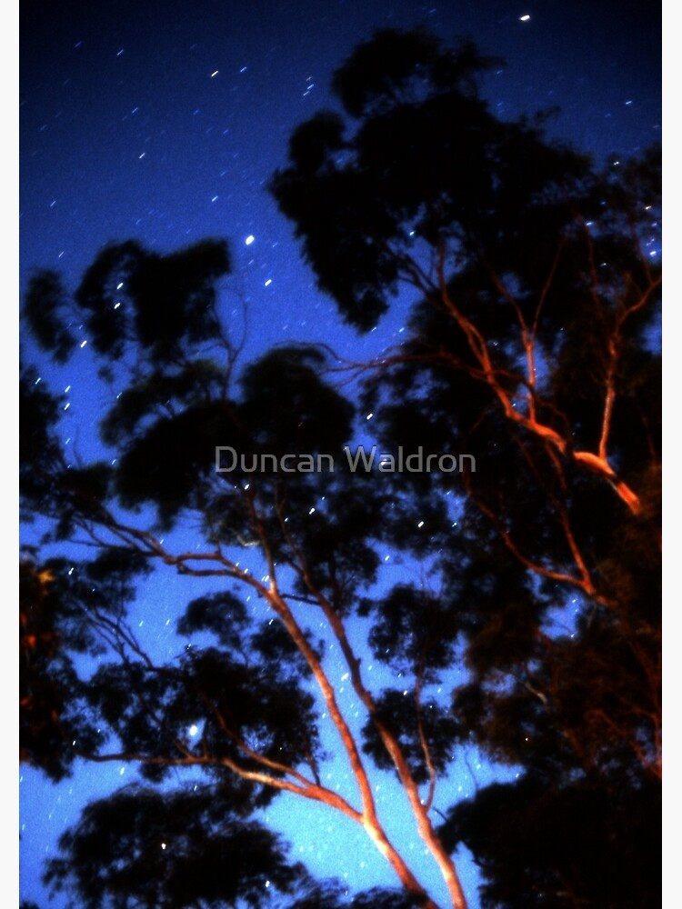 Star trails & eucalypts by DuncanW