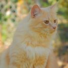 Golden Sun Cat by TrapperWeasel