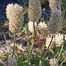 Geelong Botanic Gardens by Leanne Nelson