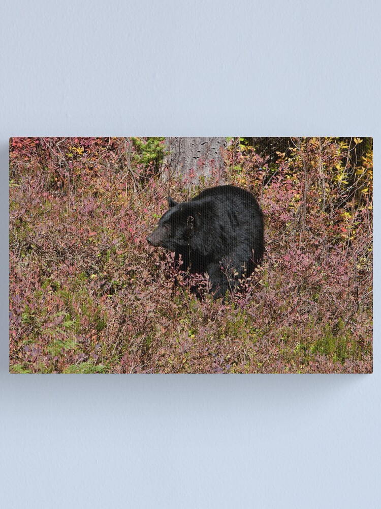Alternate view of Black Bear on the Forbidden Plateau Canvas Print