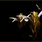 Yellow Photography Nature Flowers Strange Macabre Dark Pale by LongbowX