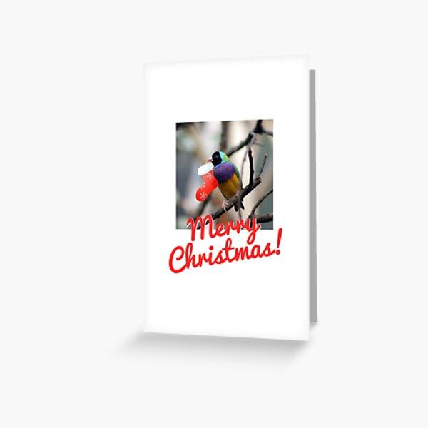 Chirstmas Cheep Greeting Card