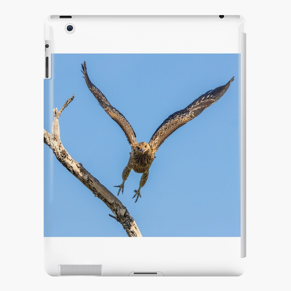 Whistling Kite, Northern Territory iPad Case & Skin
