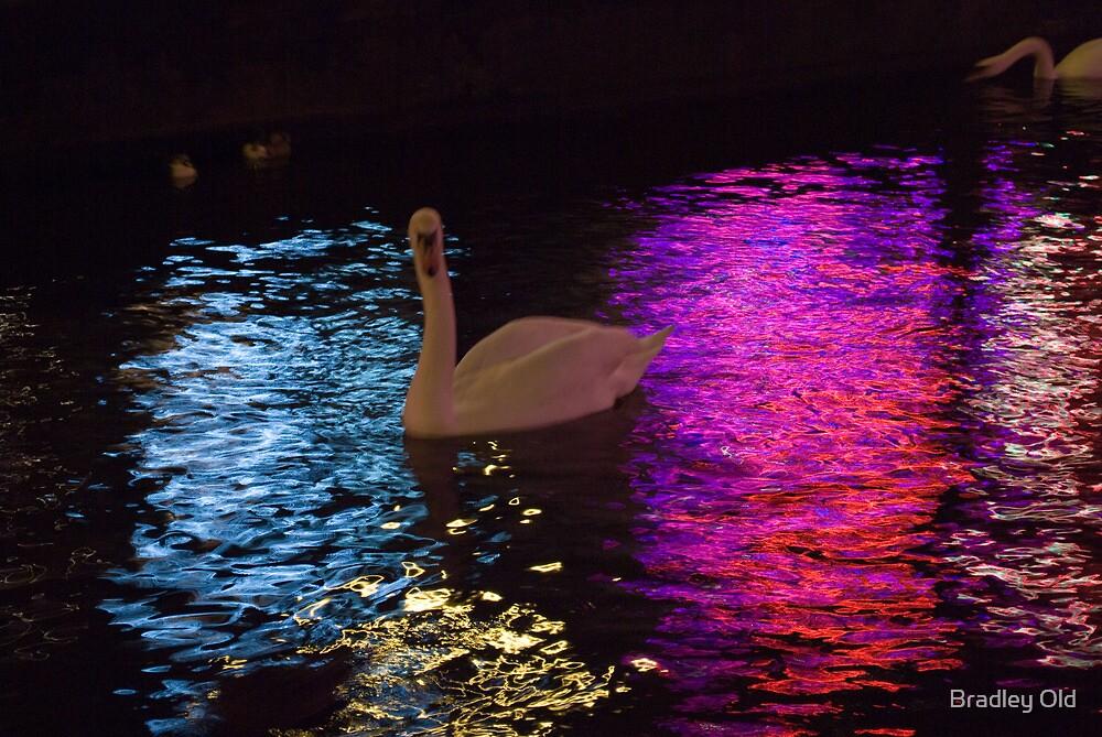 Raindow Swan by Bradley Old