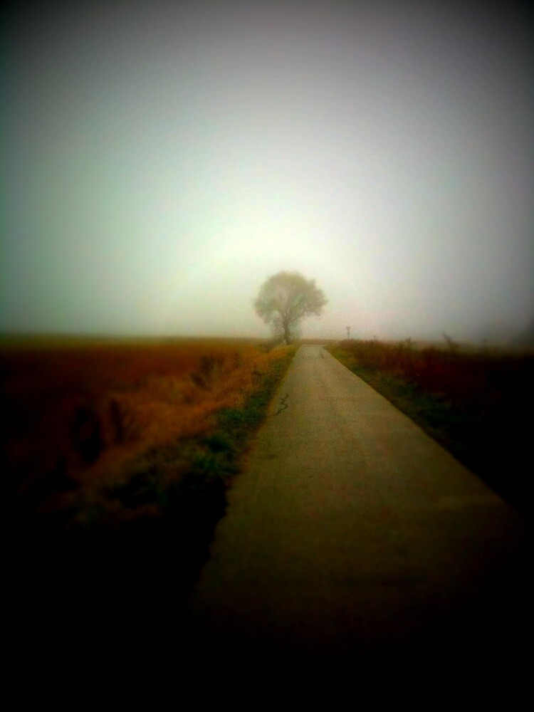 Fog, tree and an endless road by vlamas