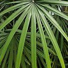 Palm Frond Drama by Betty Mackey