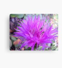 Gentle flower. Canvas Print