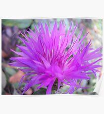 Gentle flower. Poster