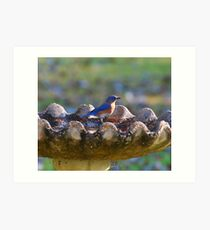 Eastern Blue Bird Art Print