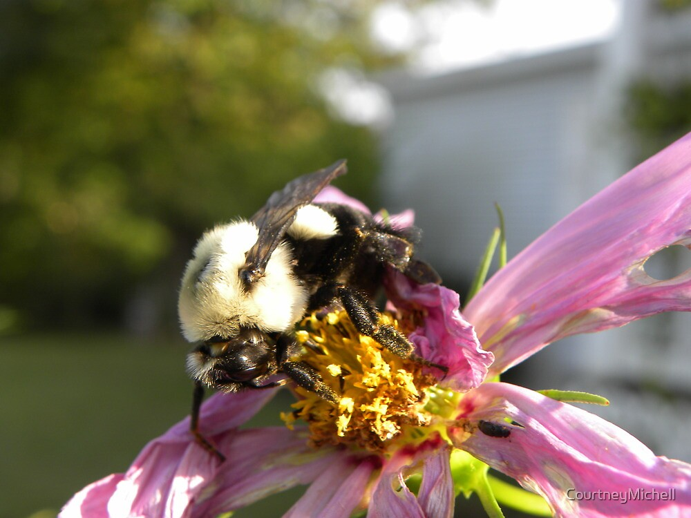 Buzzy day by CourtneyMichell