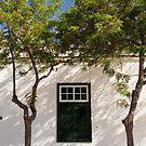 Yaiza window & trees by Neil Buchan-Grant