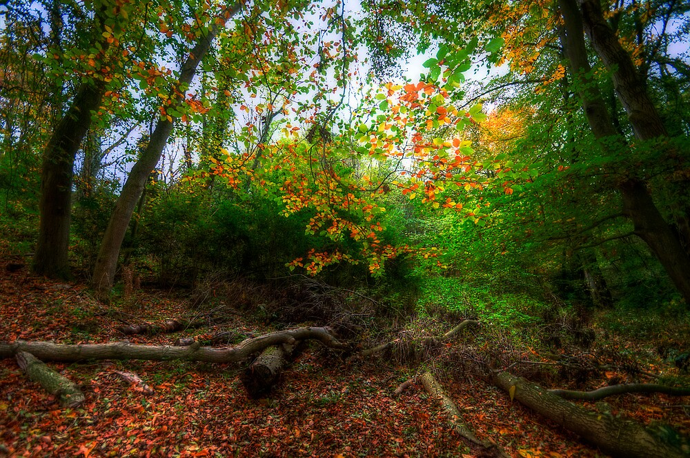 In The Forest... by Svetlana Sewell