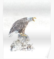 Bald eagle in snowstorm Poster