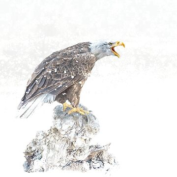Bald eagle in snowstorm by Tarrby
