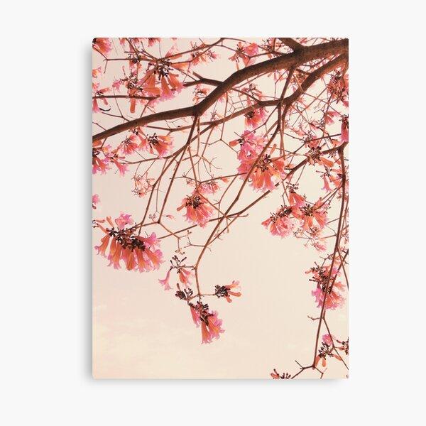 Pink Flowery Tree in Blooms  Canvas Print