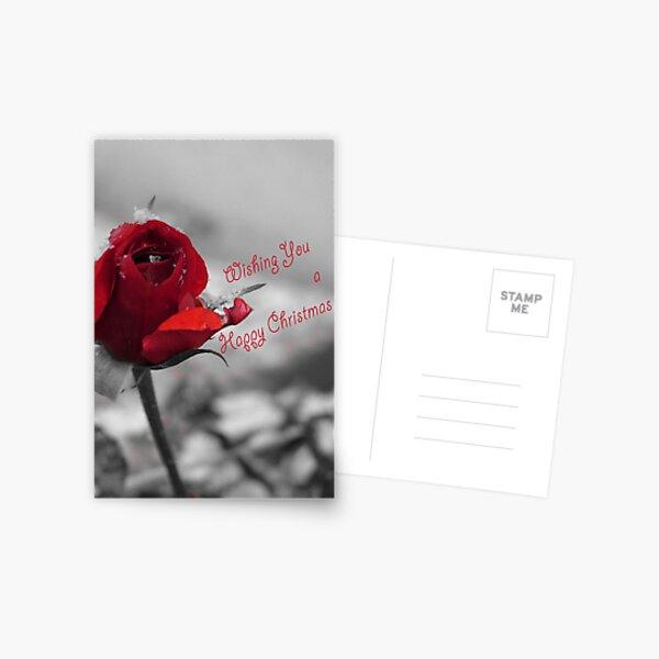 Winter Rose Christmas Card Postcard