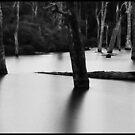 Margaret River ... by Angelika  Vogel