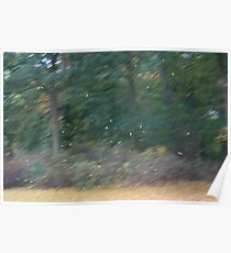 Leaves in an Autumn storm Poster