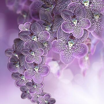 Purplish Pink Violet  Orchids by NadineMay