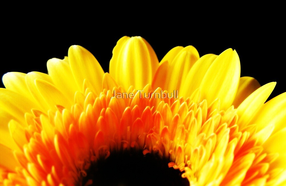 sunshine by Jane Turnbull