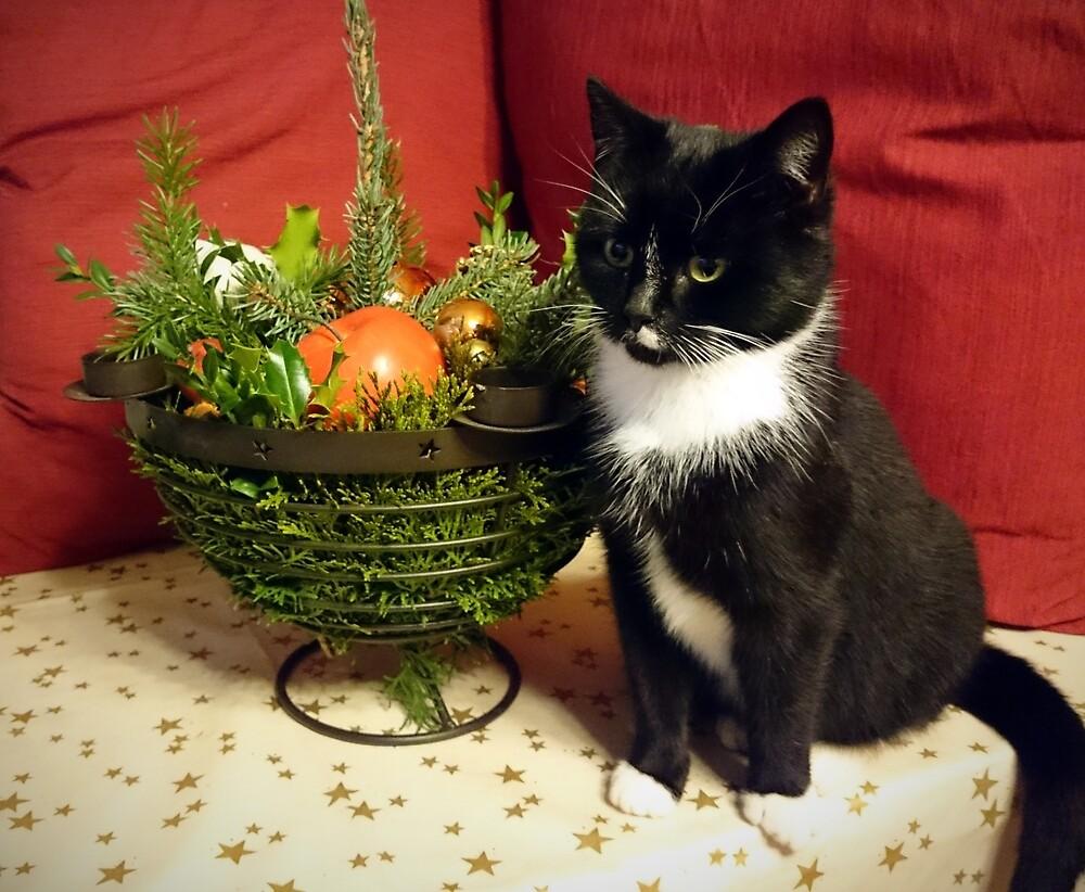 Katze Mimi mag Weihnachten von Gourmetkater