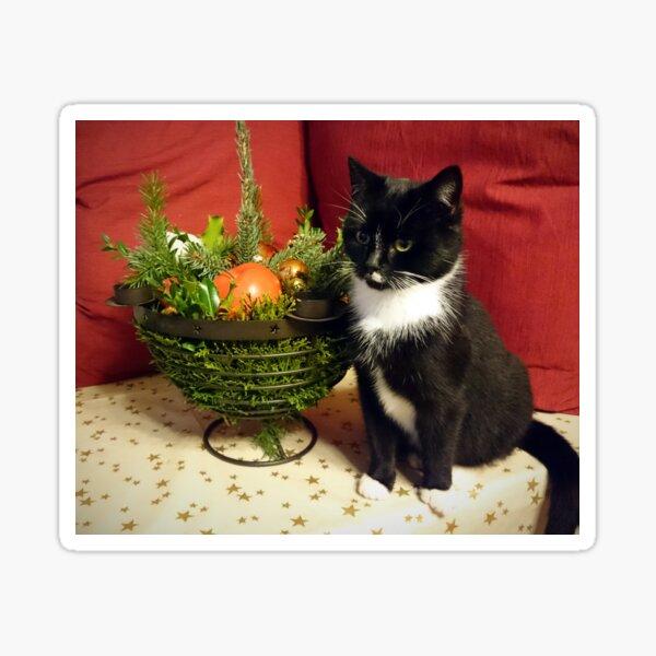 Katze Mimi mag Weihnachten Sticker