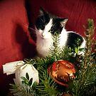 Katze Lilli mag Weihnachten von Gourmetkater